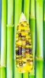 Καλαμπόκι 3 χρώμα στοκ εικόνες με δικαίωμα ελεύθερης χρήσης
