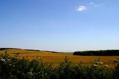 Καλαμπόκι fileds Wiltshire UK Στοκ Φωτογραφία