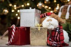 Καλημέρα, είναι Χριστούγεννα Στοκ Εικόνα