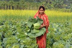 Καλλιέργεια λάχανων Στοκ Εικόνες