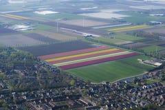 Καλλιέργεια βολβών λουλουδιών Στοκ εικόνες με δικαίωμα ελεύθερης χρήσης