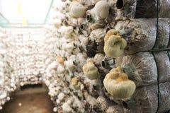Καλλιέργεια μανιταριών Στοκ φωτογραφία με δικαίωμα ελεύθερης χρήσης