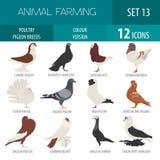 Καλλιέργεια πουλερικών Σύνολο εικονιδίων φυλών περιστεριών Επίπεδο σχέδιο απεικόνιση αποθεμάτων