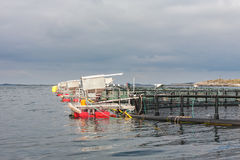 Καλλιέργεια ψαριών στα κλουβιά Στοκ Εικόνες