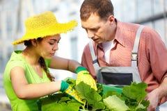 καλλιέργεια στοκ φωτογραφίες με δικαίωμα ελεύθερης χρήσης