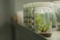 Καλλιέργειες ιστού εγκαταστάσεων Στοκ Εικόνα