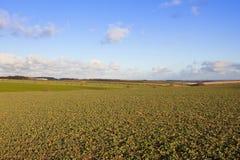 Καλλιεργήσιμο έδαφος και η κοιλάδα της Υόρκης Στοκ φωτογραφία με δικαίωμα ελεύθερης χρήσης