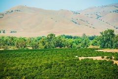 Καλλιεργήσιμο έδαφος Καλιφόρνιας Στοκ Φωτογραφία