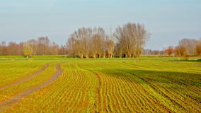 Καλλιεργήσιμο έδαφος στη φλαμανδική επαρχία στοκ φωτογραφία με δικαίωμα ελεύθερης χρήσης