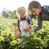 Καλλιεργήστε την εποχιακή έννοια αύξησης φύσης κήπων Στοκ εικόνες με δικαίωμα ελεύθερης χρήσης