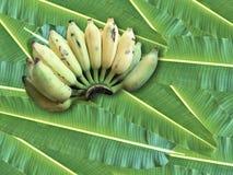 Καλλιεργημένη μπανάνα, ταϊλανδική μπανάνα και πράσινο φύλλο μπανανών Στοκ Εικόνα