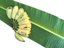 Καλλιεργημένη μπανάνα, ταϊλανδική μπανάνα και πράσινο φύλλο μπανανών Στοκ Φωτογραφία