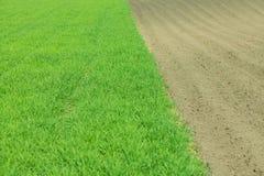 Καλλιεργημένο πράσινο λιβάδι στοκ εικόνα