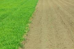 Καλλιεργημένο πράσινο λιβάδι στοκ εικόνες