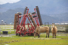 Καλλιεργητής και άλογα Στοκ εικόνα με δικαίωμα ελεύθερης χρήσης