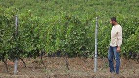 Καλλιεργητής που συγκομίζει τα σταφύλια κρασιού απόθεμα βίντεο