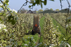 Καλλιεργητής φρούτων που εργάζεται μεταξύ των δέντρων ανθών στοκ φωτογραφίες