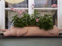 Καλλιεργητής Piggy Στοκ εικόνες με δικαίωμα ελεύθερης χρήσης