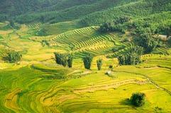 Καλλιεργώντας Βιετνάμ Στοκ Εικόνες
