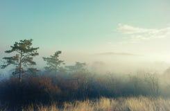 Καλλιτεχνική φωτογραφία ενός μυστήριου τοπίου στην ομίχλη Στοκ φωτογραφία με δικαίωμα ελεύθερης χρήσης