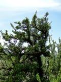 καλλιτεχνικό δέντρο Στοκ Εικόνες