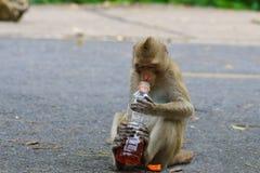 Καλοί πίθηκοι, αστείος πίθηκος Στοκ Εικόνες