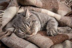Καλοί χνουδωτοί ύπνοι γατών στο καρό Στοκ Εικόνα