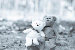 Καλοί teddy καφετής και άσπρος Στοκ φωτογραφία με δικαίωμα ελεύθερης χρήσης