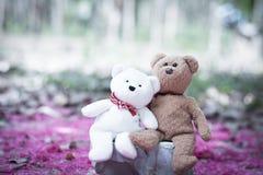 Καλοί teddy καφετής και άσπρος Στοκ Εικόνες