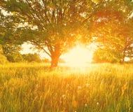 καλοκαίρι ανασκόπησης ηλιόλουστο Το φως του ήλιου πρωινού φωτίζει το θερινό υδρόμελι Στοκ Εικόνα