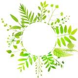 Καλοκαίρι γύρω από το πλαίσιο με τα βεραμάν φύλλα διανυσματική απεικόνιση