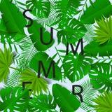 Καλοκαίρι Διανυσματική απεικόνιση με την εγγραφή μέσα στα πράσινα τροπικά φύλλα Θερινή εγγραφή Στοκ Φωτογραφίες