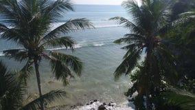 Καλοκαίρι θάλασσας και τοπ άποψης φοινίκων φιλμ μικρού μήκους