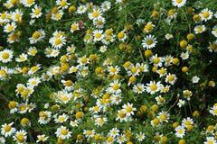 καλοκαίρι κήπων λουλουδιών ανθών Στοκ φωτογραφία με δικαίωμα ελεύθερης χρήσης
