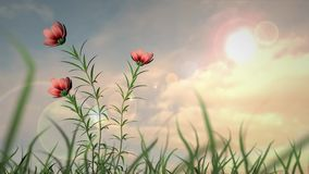 καλοκαίρι κήπων λουλουδιών ανθών απόθεμα βίντεο