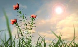 καλοκαίρι κήπων λουλουδιών ανθών Στοκ φωτογραφίες με δικαίωμα ελεύθερης χρήσης