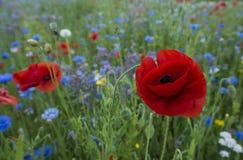 καλοκαίρι κήπων λουλουδιών ανθών Στοκ Εικόνα