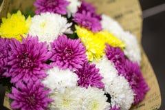 καλοκαίρι κήπων λουλουδιών ανθών Στοκ Εικόνες