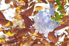 καλοκαίρι κήπων λουλουδιών ανθών Στοκ εικόνα με δικαίωμα ελεύθερης χρήσης