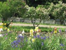 καλοκαίρι κήπων λουλουδιών ανθών Στοκ Φωτογραφία