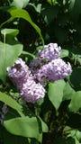 Καλοκαίρι κήπων λουλουδιών Στοκ φωτογραφία με δικαίωμα ελεύθερης χρήσης
