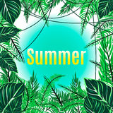 Καλοκαίρι και άγριο φύλλο Στοκ Φωτογραφίες