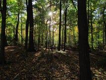 Καλοκαίρι και δάσος με τις σκιές Στοκ φωτογραφίες με δικαίωμα ελεύθερης χρήσης