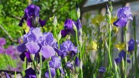 Καλοκαίρι και λουλούδια φιλμ μικρού μήκους