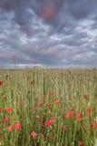 καλοκαίρι παπαρουνών φύσης στοιχείων σχεδίου Στοκ φωτογραφία με δικαίωμα ελεύθερης χρήσης