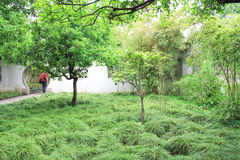 καλοκαίρι παλατιών κήπων τ Πράσινοι θάμνοι Στοκ Φωτογραφίες