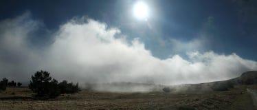 καλοκαίρι πεύκων 2008 της Κριμαίας βουνών Στοκ Φωτογραφίες