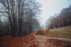 καλοκαίρι πεύκων 2008 της Κριμαίας βουνών Στοκ Εικόνες