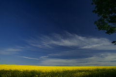 Καλοκαίρι σε Cambridgeshire Στοκ φωτογραφία με δικαίωμα ελεύθερης χρήσης