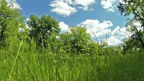 Καλοκαίρι στο δάσος απόθεμα βίντεο